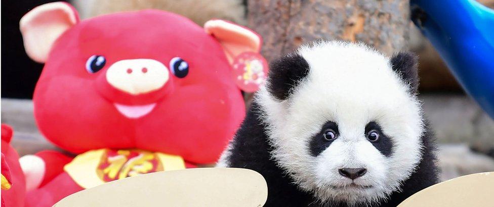 prase i panda igračke