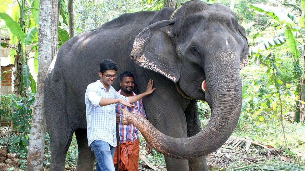 Dakshayani, an elephant that died in February 2019 aged 88