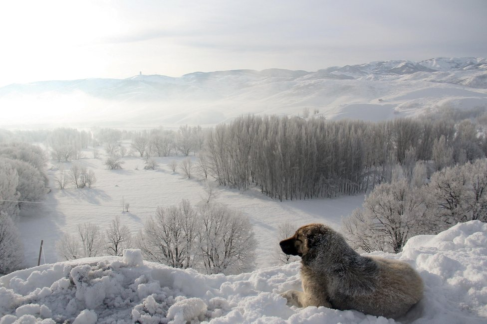 A dog looking out at a snow-covered scene