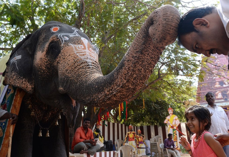An elephant touches a man's head with its trunk
