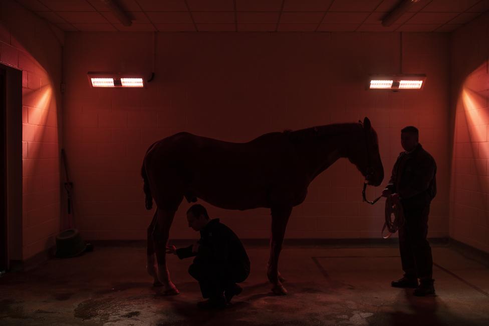 ultrazvuk konja u engleskoj