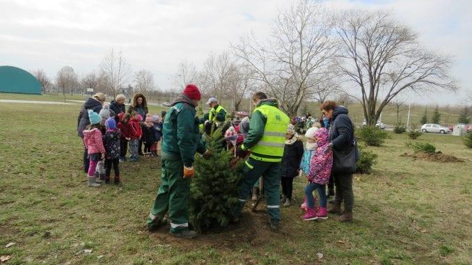 Zelenilo Beograd: Kupujte jelke sa busenom 3