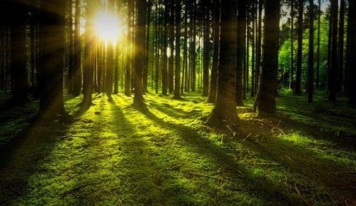 Milijarda hektara šume mogla bi da uspori globalno zagrevanje 10