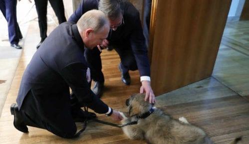 Božović: Obožavanje Vučića nalik obožavanju Putina 11