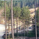 Iskrčili šumu i sagradili pogon za proizvodnju municije 5