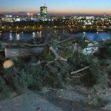 Da li će iko odgovarati za posečena stabla na Kalemegdanu? 1