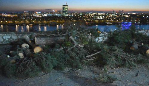 Da li će iko odgovarati za posečena stabla na Kalemegdanu? 5