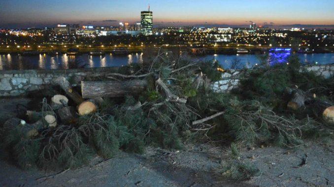 Da li će iko odgovarati za posečena stabla na Kalemegdanu? 3