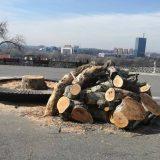 Zelenilo sutra sadi 300 stabala na Kalemegdanu i Ušću 13