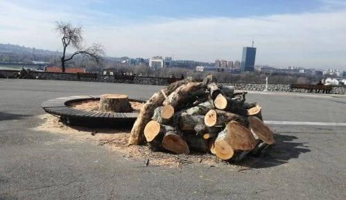Zelenilo sutra sadi 300 stabala na Kalemegdanu i Ušću 11