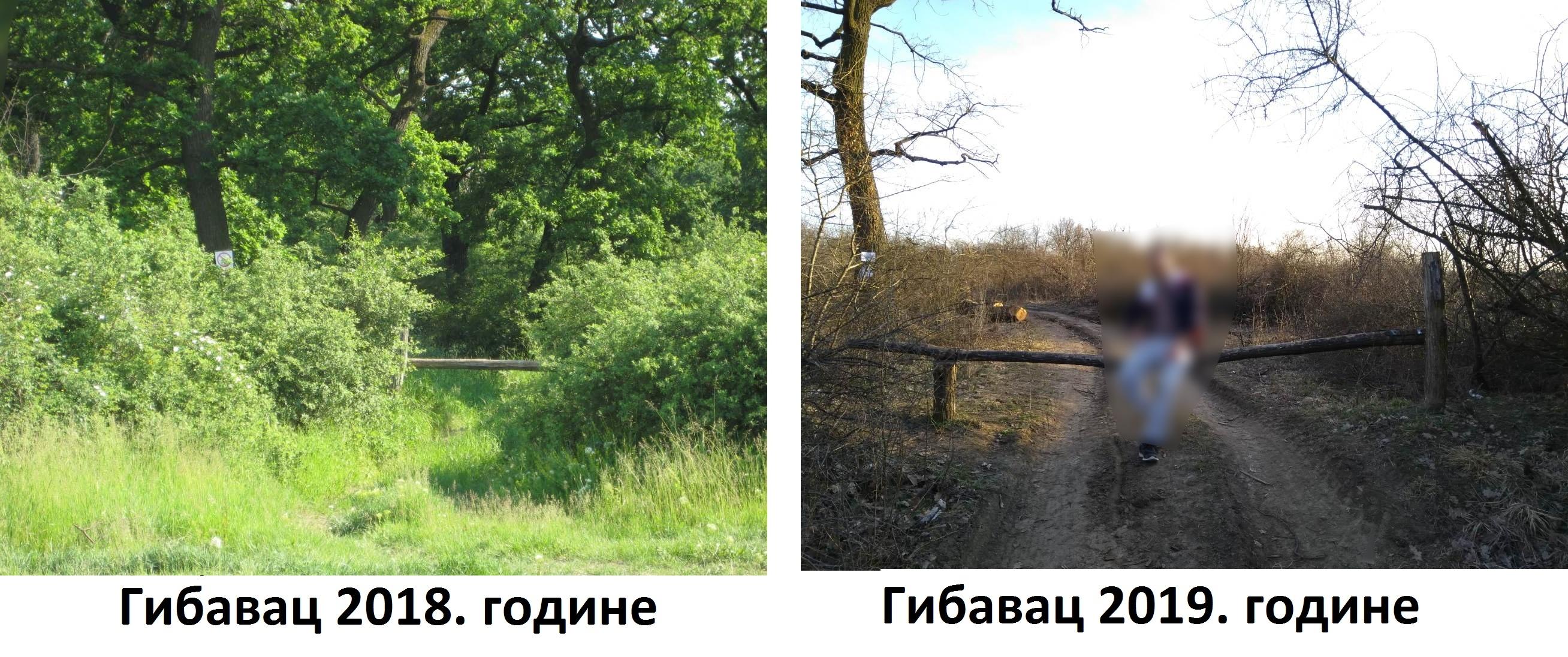 Seča šume Gibavac bila po zakonu 2