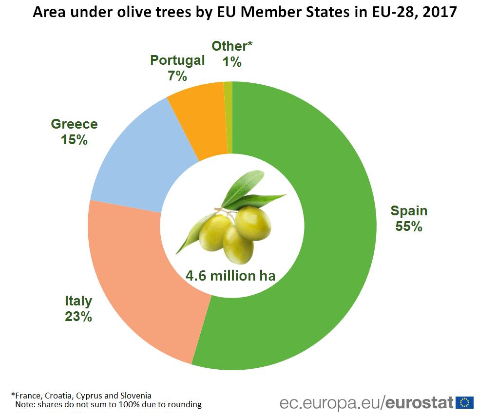 Više od polovine maslina u Evropi uzgaja se u Španiji 2