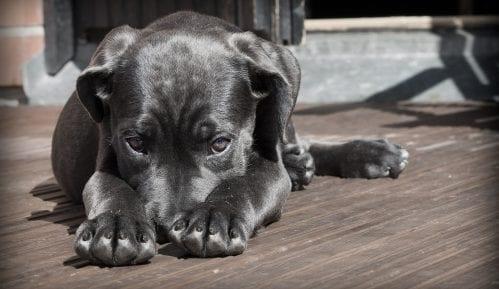Prikupljeno više od 30.000 potpisa za veće kazne za zlostavljanje životinja 3