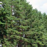 U Toplici bespravno posečeno 4.280 kubnih metara šume 8