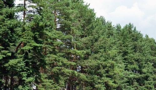 Nova stranka: 16 odsto od svih izgubljenih šuma Srbije u Srednjebanatskom okrugu 5