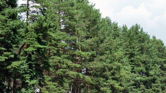 U Toplici bespravno posečeno 4.280 kubnih metara šume 3