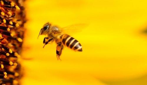 Sprečiti trovanje pčela čiji je doprinos poljoprivredi veći od 500 miliona evra 1
