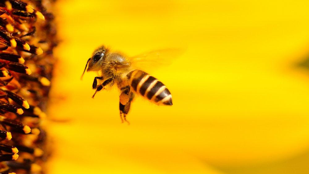 Kako izgleda biti pčela? 2