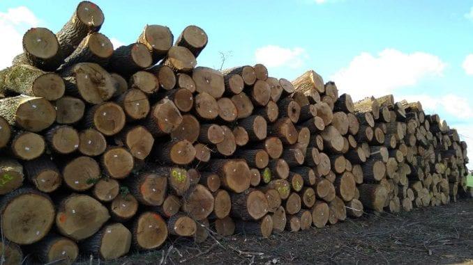 Seča šume Gibavac bila po zakonu 1