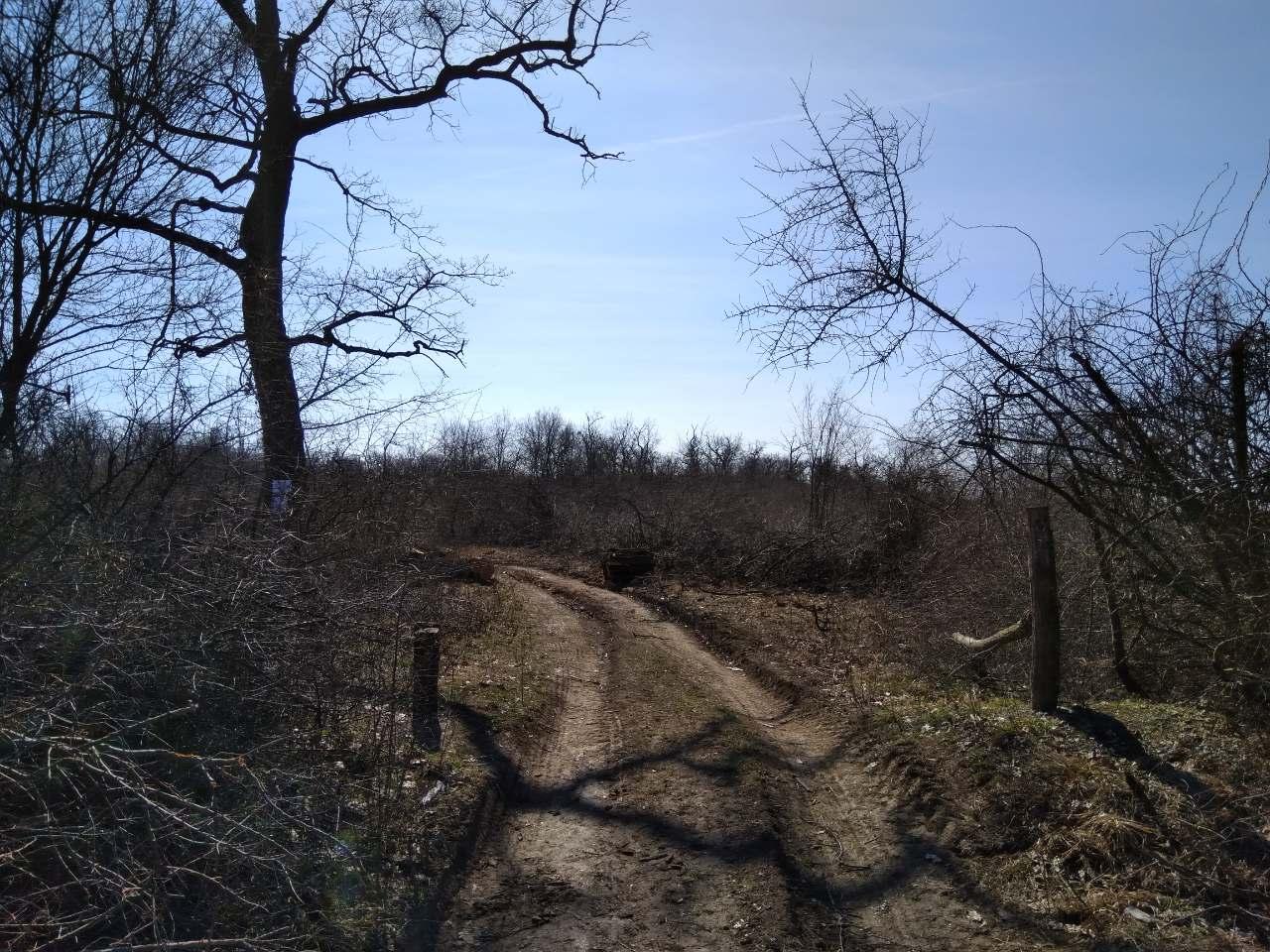 Seča šume Gibavac bila po zakonu 3