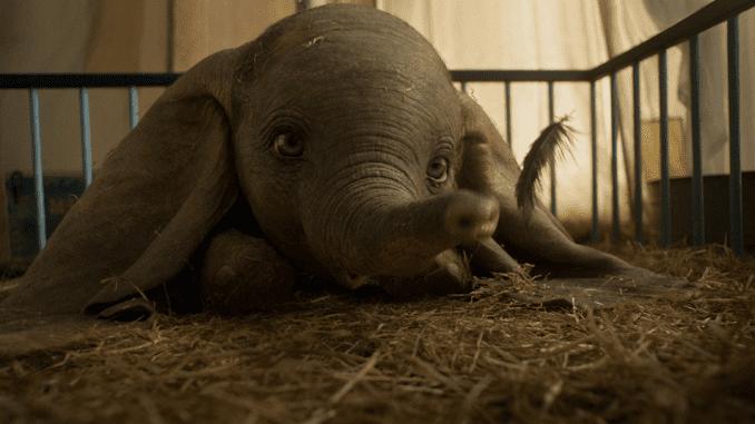 Slonče Dambo ponovo na velikim ekranima (VIDEO) 1