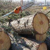 CINS: Srbija izgubila 2,5 milijarde dinara zbog ilegalne seče šuma uz administrativnu liniju 7