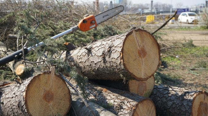 CINS: Srbija izgubila 2,5 milijarde dinara zbog ilegalne seče šuma uz administrativnu liniju 1