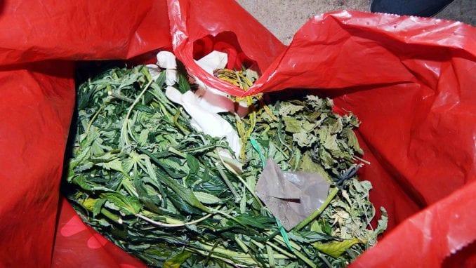 Otkrivena laboratorija za uzgoj marihuane, zaplenjeno 110 kilograma droge 1