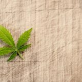 Da li i pod kojim uslovima legalizovati marihuanu u Srbiji? 4