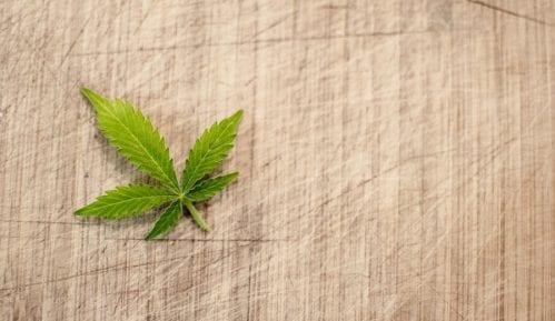 Da li i pod kojim uslovima legalizovati marihuanu u Srbiji? 12