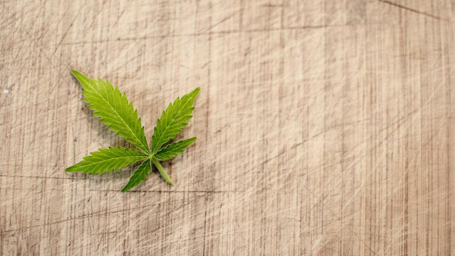 Da li i pod kojim uslovima legalizovati marihuanu u Srbiji? 1