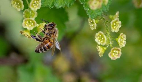 """Pokrenuta kampanja """"Mesec zaštite pčela"""" 2"""