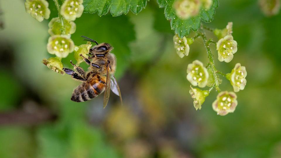 Kako izgleda biti pčela? 3