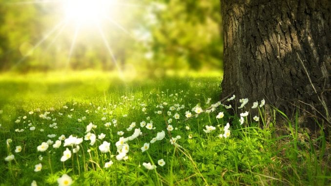 U Srbiji danas sunčano i toplo, temperatura do 33 stepena 4
