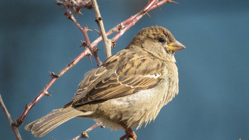 Populacija uobičajenih vrsta ptica u EU pokazuje znake oporavka 1