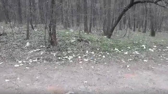 Zaječar: Pluća grada zatrpana smećem, deponije niču širom Kraljevice 1