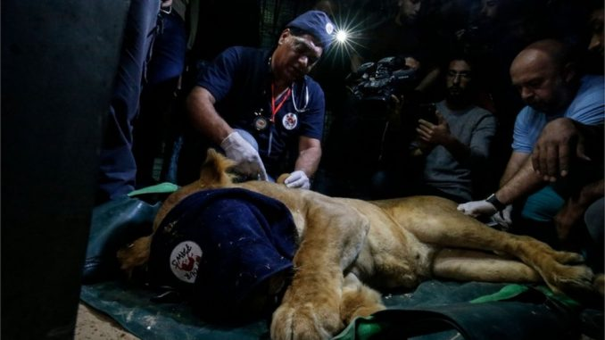 Životinje iz zoološkog vrta u Gazi premeštene u Jordan 3