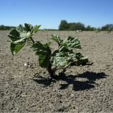 Ogroman broj biljaka je potpuno nestao sa lica Zemlje 12