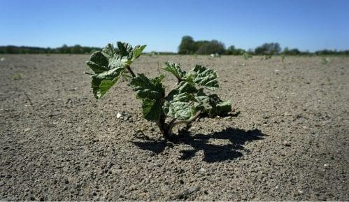 Ogroman broj biljaka je potpuno nestao sa lica Zemlje 11