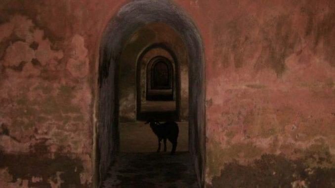 Indija (4): Svi isprepleteni putevi 1
