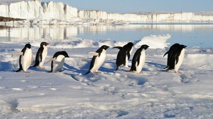 Pingvinarijum u Beo zoo vrtu do kraja aprila 4