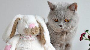 Šta raditi kad mačka dođe u kontakt sa preparatom protiv buva za pse? 3