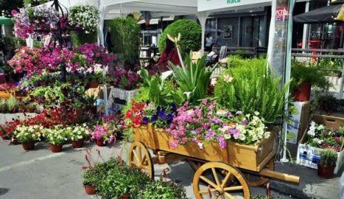 Kostolac: Prijave za Festival cveća 10