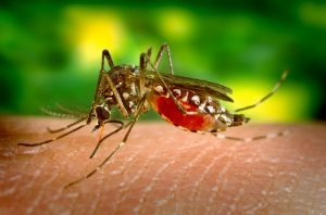 Bolesti koje prenose krpelji i komarci 3