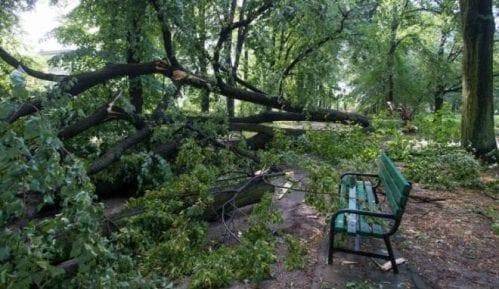 Olujni vetar ruši stabla u Novom Sadu, nema povređenih 8
