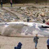 Svetski fond: U stomaku uginulog kita pronađena 22 kg plastičnih kesa 11