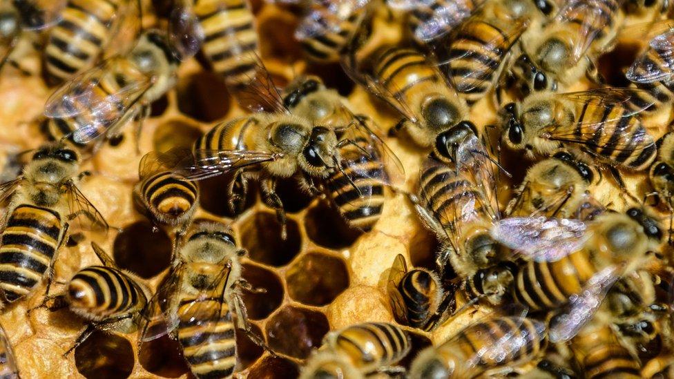 Sa milion potpisa, javno mnjenje se uskomešalo po pitanju insekticida
