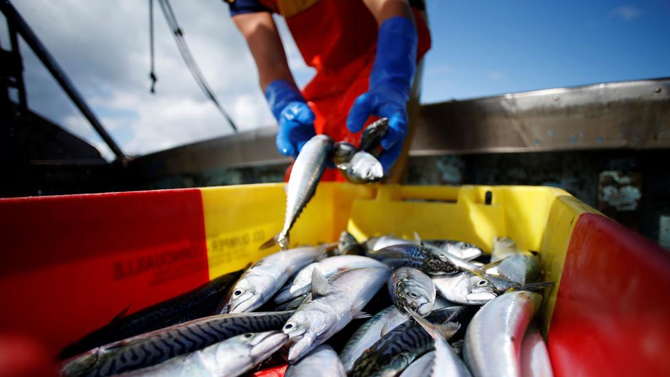 Novi propisi trebalo bi da spreče da se ulov baca nazad u more