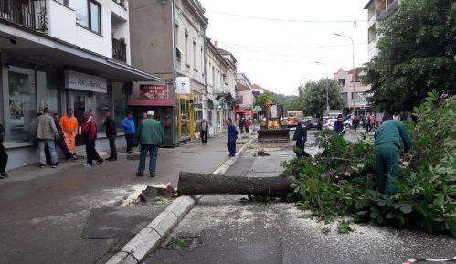 Seča stabala u Aleksincu: Za opštinu opravdano, ali ne i za građane 8