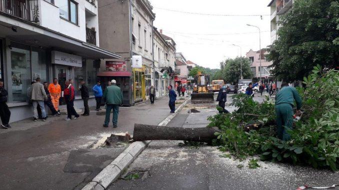 Seča stabala u Aleksincu: Za opštinu opravdano, ali ne i za građane 1